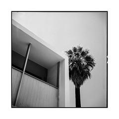 Palm Springs 2018