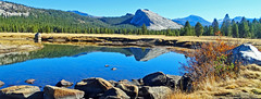 Lambert Dome Reflected on Tuolumne River, Yosemite 2018