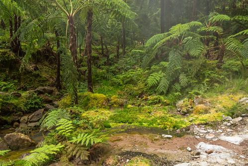 Lush Forest at Caldeira Velha