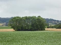 Oudezeelle la Motte Castrale