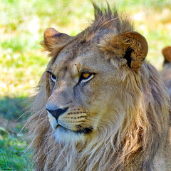 Le Lion - Photo of Mortcerf