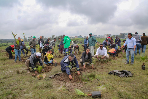 CGIAR staff in Addis Ababa plant trees