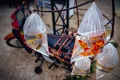 Roadside Fish Sale