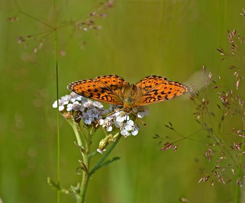 Chasing butterflies ;-) (Episode 5)
