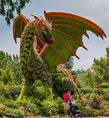 2019.07.28_Atlanta Botanical Garden