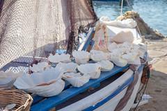 Große, weiße Muscheln liegen auf einem alten Boot am Strand von Paros, Griechenland