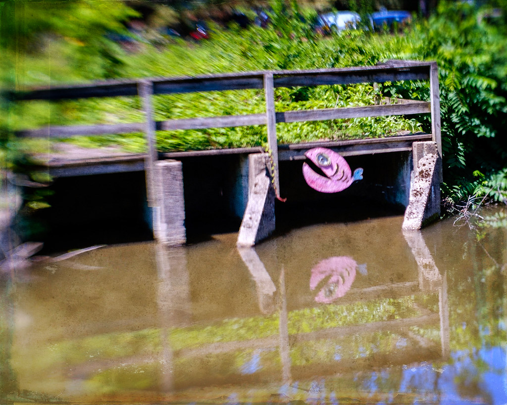 July 12 Funny Fish and Reflection Lambertville Lens Baby_