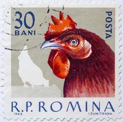 Roumania Fowl Cock 30