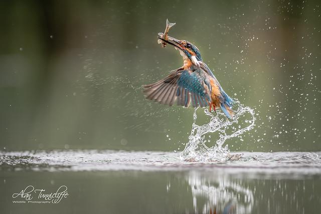 A good catch