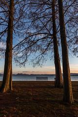 Image by Massimo_Discepoli (massimodiscepoli) and image name Between the trees photo
