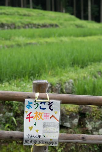 20190709 Yotsuya Terraced Rice Paddy 6