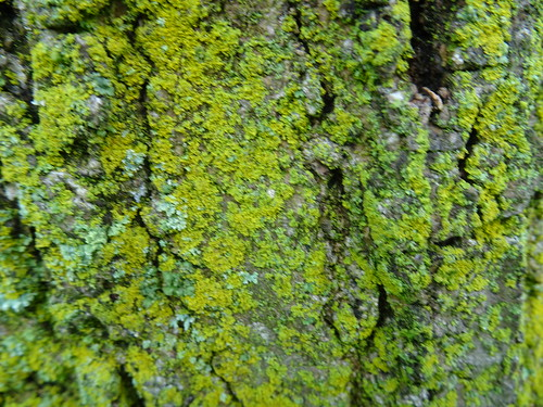 Cassius photographed the bark of a tree  - Explored!