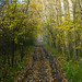 2003.11.09. Őszi fények a Csordajáráson - Fotók:PURGEL ZOLTÁN©