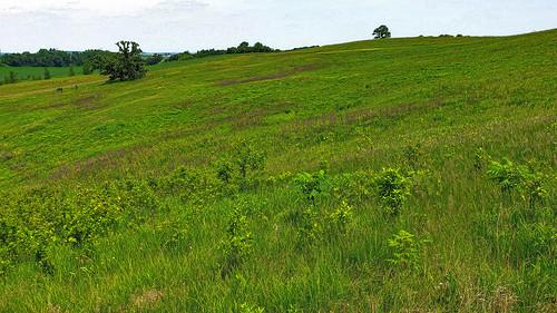 Hauser Road Prairie