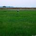 2004.07.22. Nyáresti séta a Lándor-tó környékén - Fotók:PURGEL ZOLTÁN©