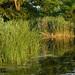 2005.06.15. Csordajárás - Fotók:PURGEL ZOLTÁN©