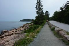 Walking trail along the Acadia Coast