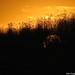 2005.10.28. Nyárvégi séta a Holt-Tiszán - Fotók:PURGEL ZOLTÁN©