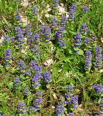 Other flora 1 - Moulismes Nature