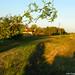 2006.08.29. Parlagfűhelyzet Szegváron - Fotók:PURGEL ZOLTÁN©