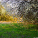 2007.03.16. Éledező természet a Csordajáráson - Fotók:PURGEL ZOLTÁN©