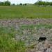 2007.04.30. Barangolás a Kontrában - Fotók:PURGEL ZOLTÁN©