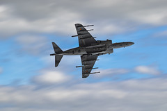 Spanish Harrier