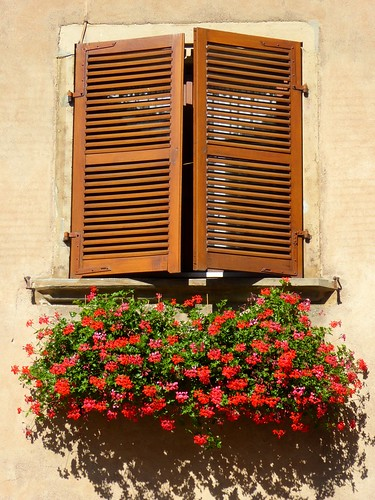 Windows and flowers, Mittelbergheim, France