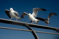 Seaside Trio