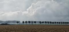 Polder De Biesbosch - Dordrecht