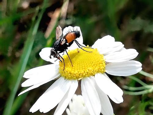 Kleines seltsames Flugtier mit orangenen Flanken:)