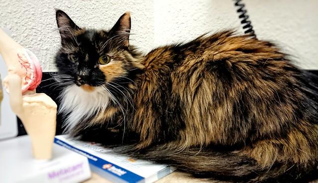 Bellatrix at the vet