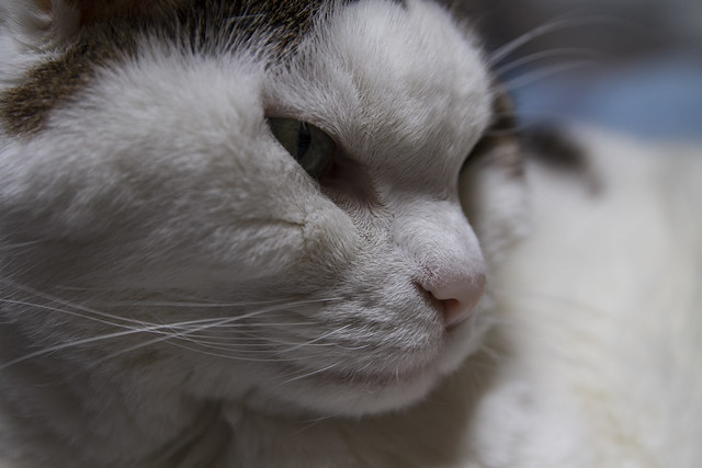 Photo:Flash Light! -[ Happy Caturday ]- By Carbon Arc