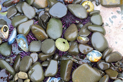 Seaweed-2019-98