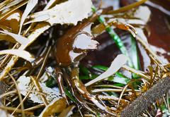 Seaweed-2019-92