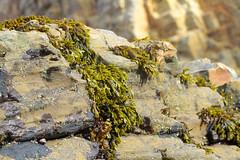 Seaweed-2019-258