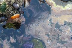 Seaweed-2019-254