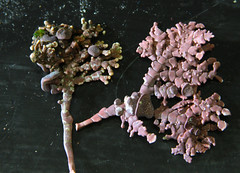 Seaweed-2019-211
