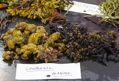 Seaweed-2019-208