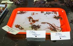 Seaweed-2019-170
