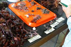 Seaweed-2019-164