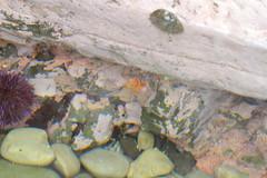 Seaweed-2019-138