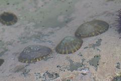 Seaweed-2019-136