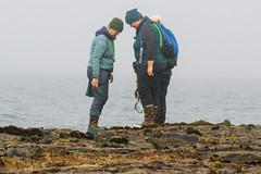 Seaweed-2019-127