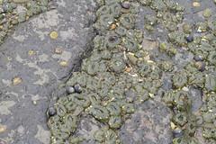 Seaweed-2019-126