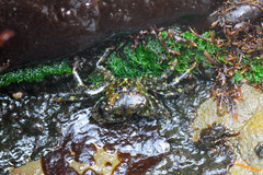 Seaweed-2019-124