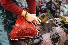 Seaweed-2019-57