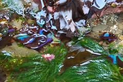 Seaweed-2019-43