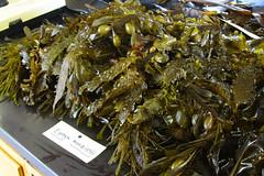 Seaweed-2019-190
