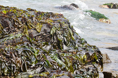 Seaweed-2019-280
